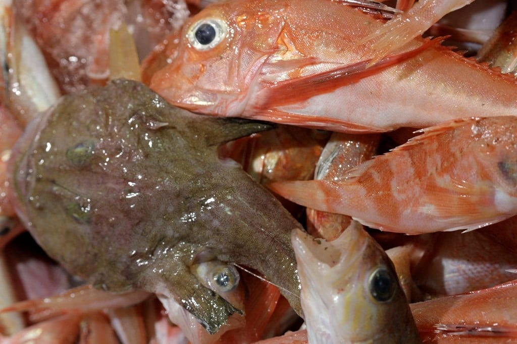 Peix de roca  Restaurant Sant Antoni